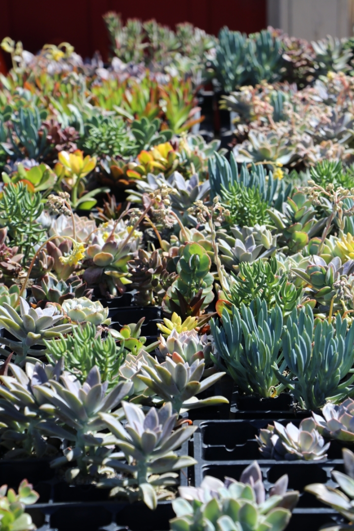 Busy students rejoice for drought tolerant plants